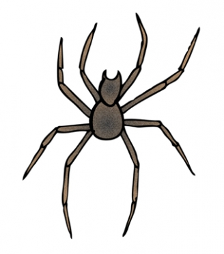 Spider Display Picture