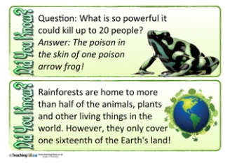Rainforest Did You Know? Cards