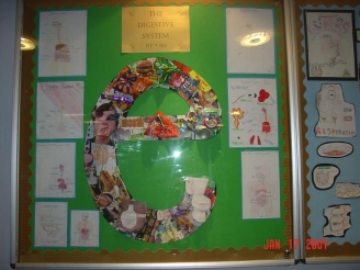 The Digestive System Display