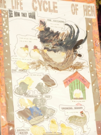 The Life Cycle of a Hen Display