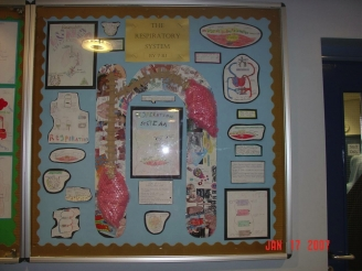 The Respiratory System Display