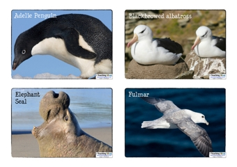 Arctic and Antarctic Animals Resources