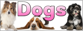 Pets Display Banners