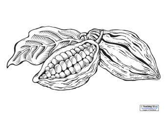 Cocoa Pod Colouring Page Teaching Ideas
