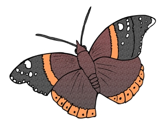 Butterfly Display Picture